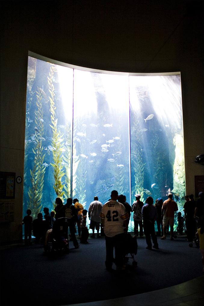 aquarium001.jpg
