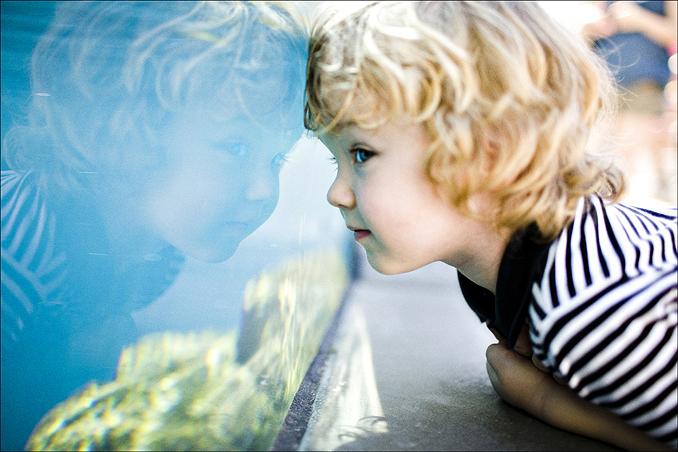 aquarium005.jpg