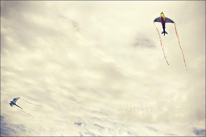 kites003.jpg